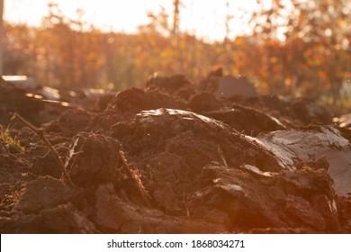 clods of earth in a field
