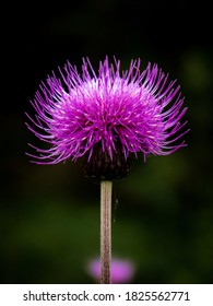 A cloesup of a purple flower