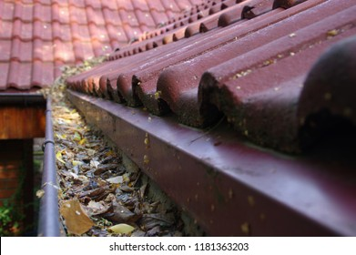 Clogged gutter through the leaves. Spring and autumn cleaning of the roof gutter.