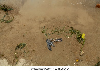 clogging of the environment and ecology, dead bird
