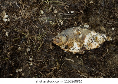 clogging up the environment and ecology, dead fish