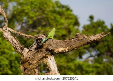 a clolorfull bird in the Yala Nationalpark in Sri Lanka