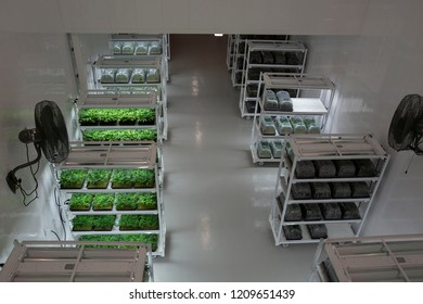 Clone Cannabis Plants in a Government Sanctioned Grow Facility