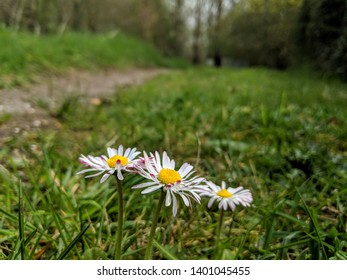 Close up of 3 colorful daisies in the forest