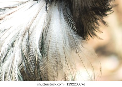 Close up abstract background image of Emu Feathers