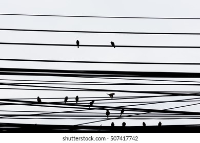 close up abstract background of shadow of bird on cable.