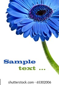 Close up abstract of a blue Gerbera daisy on a white background with space for text