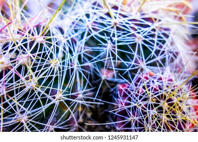 Close Up Abstract of Spiky Cactus Plant