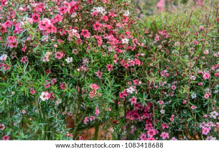Close Abstract View Tiny Pink Flowers Stock Photo Edit Now