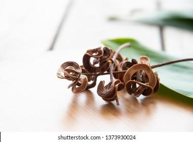 close up Acacia mangium on blur background.
