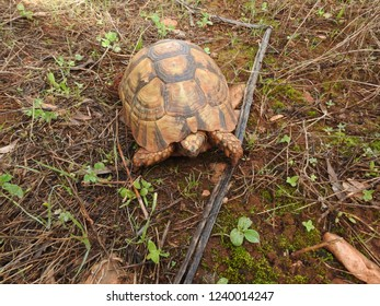 Close up of African spurred tortoise resting in the garden, Slow life ,Beautiful Tortoise - morocco