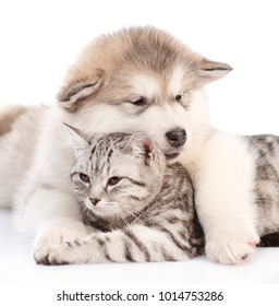 Close up alaskan malamute puppy embracing a cat.  isolated on white background.