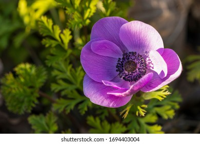 close up of an anemone in warm light
