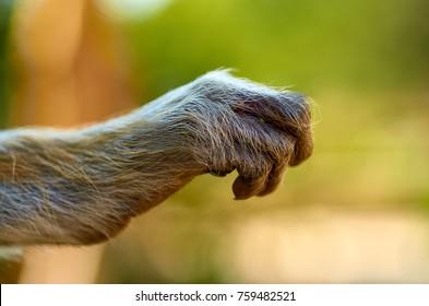 Close up of animal hand. Monkey hand.