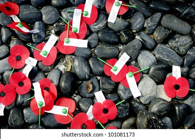 Close up of an ANZAC red poppies on the ground during a National War Memorial Anzac Day services in New Zealand.