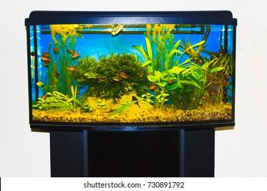 close up of aquarium tank full of fish