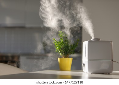 Close up of aroma oil diffuser on the table at home, steam from the air humidifier, houseplant on background. Ultrasonic technology, increase in air humidity indoors, comfortable living conditions.