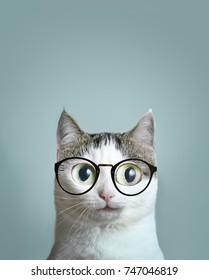 close up art portrait funny meme of blue eyed cat in short sight myopia correction glasses eyewear