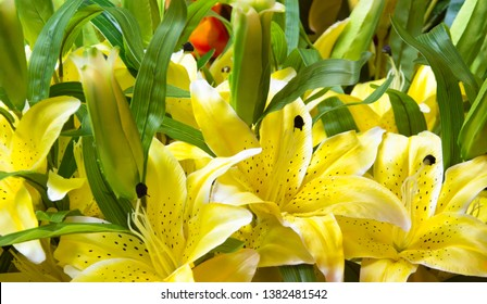 Red And Yellow Lily Flowers Images Stock Photos Vectors