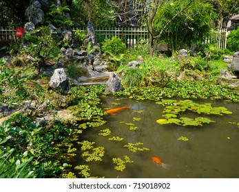 Close up of a artificial pond in the patio with koi fish swiming, in the city of Hue, in Vietnam
