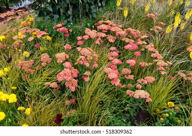 Close up an attractive and colourful flower border with Achillea millefolium Paprika and Carex brunnea jenneke