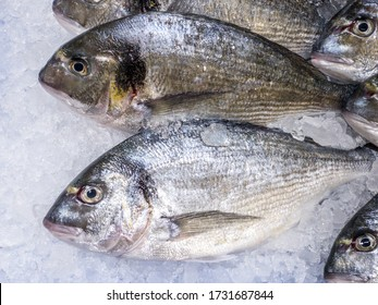 Close Up of aurata on ice store counter. Fresh sea bream on displayed at supermarket. Sell cold iced seafood in a market. Healthy sea food diet concept.
