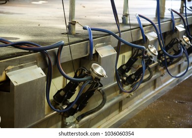 Close up of automatic milking cluster in milking parlour