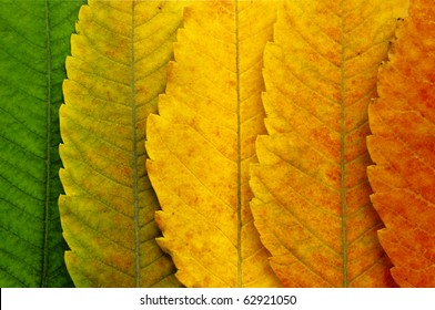 close up of autumn leaves