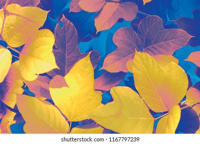 Close up autumn leaves, contrasting