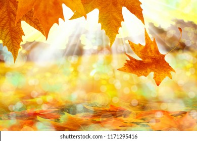 Close up autumn leaves with lightbeam