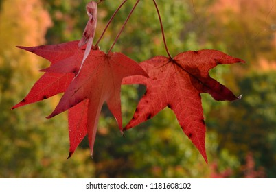 Close up of autumn leaves on a tree.