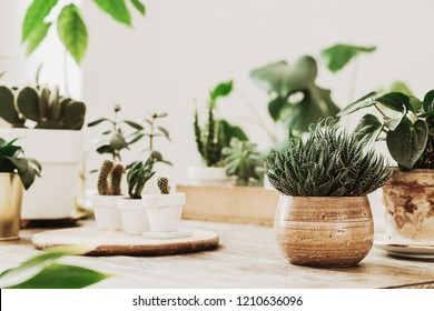 Wood /& Glass Small Greenhouse Indoor Windowsill House Plants Herbs Cactus Bonsai Succulents