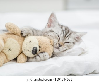 Close up baby kitten sleeping with toy bear