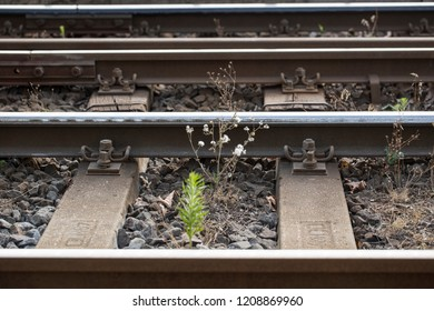 a close up background desktop wallpaper of horizontal tram rails with wooden railway sleepers surrounded by gravel stones, green plant and yellow brown branches shot in Budapest, Hungary