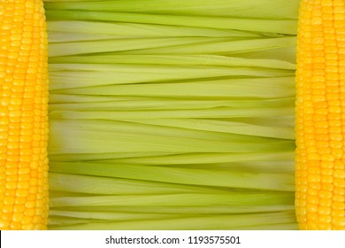 Close up background of green corn cob leaves are laid horizontally and two yellow corn cobs on left and right sides copy space