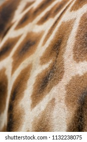 Close up background  image of the patterning of a Giraffe