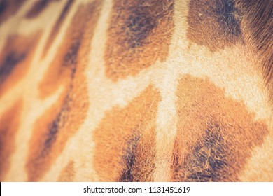 Close up background  image of the patterning on a Giraffe