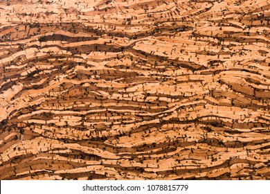 Close Up Background and Texture of Cork Board Wood Surface, Nature Product Industrial