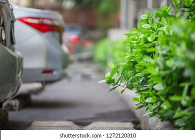 Close up background view of leaves (green, colorful, black) according to the direction of light and growth, natural beauty, wallpaper of planted trees planted in the garden or home interior, shelter