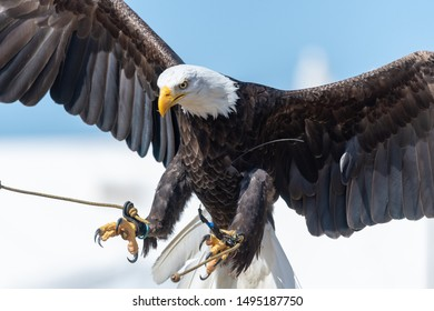 Falconry Images, Stock Photos & Vectors | Shutterstock