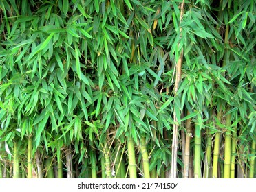 close up of bamboo growing in nature showing lots of leaves