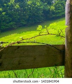 Close up of Barbed wire and thorn bush around a fence in front of a green meadow and forest