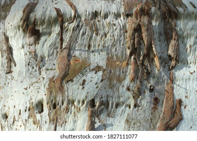 Gros plan sur une écorce et marquage abstrait sur le tronc d'un eucalyptus en Australie