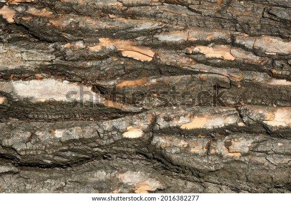 Close Up of Bark on Tree Stump. Old tree. many years old. carbon sink. close up of bark.macro photography. multi use. blog. article. background or backdrop. sunlight on bark. High quality photo