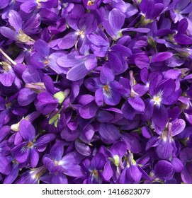 A close up of a basket of wild violets