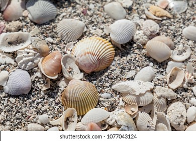 Close up of beach sand with lots of sea shells.
