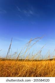 Close up of beautiful African plains landscape and blue sky (Rwanda)