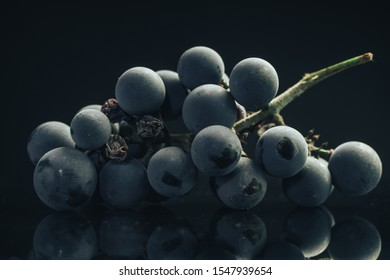 Close up beautiful blue wet Isabella grapes bunch background.