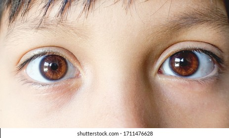 Close up beautiful brown eyes of a young boy. Wide open brown eyes looking to the camera