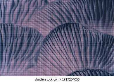 Close up beautiful bunch mushrooms color light. Macro  photography view. Close-up of pixel.